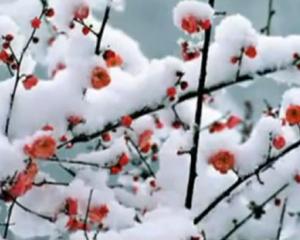 Сніжність